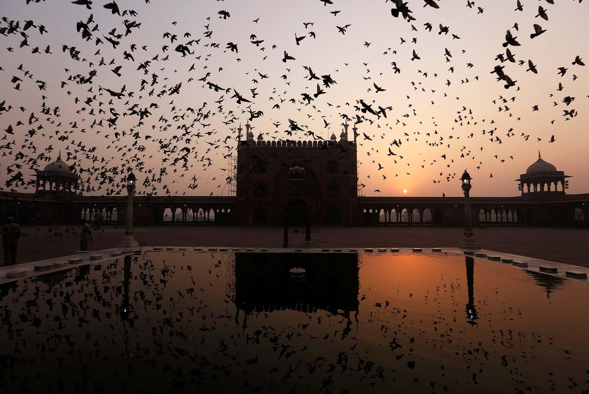 Pájaros vuelan sobre el Jama Masjid en la salida del sol en Nueva Deli