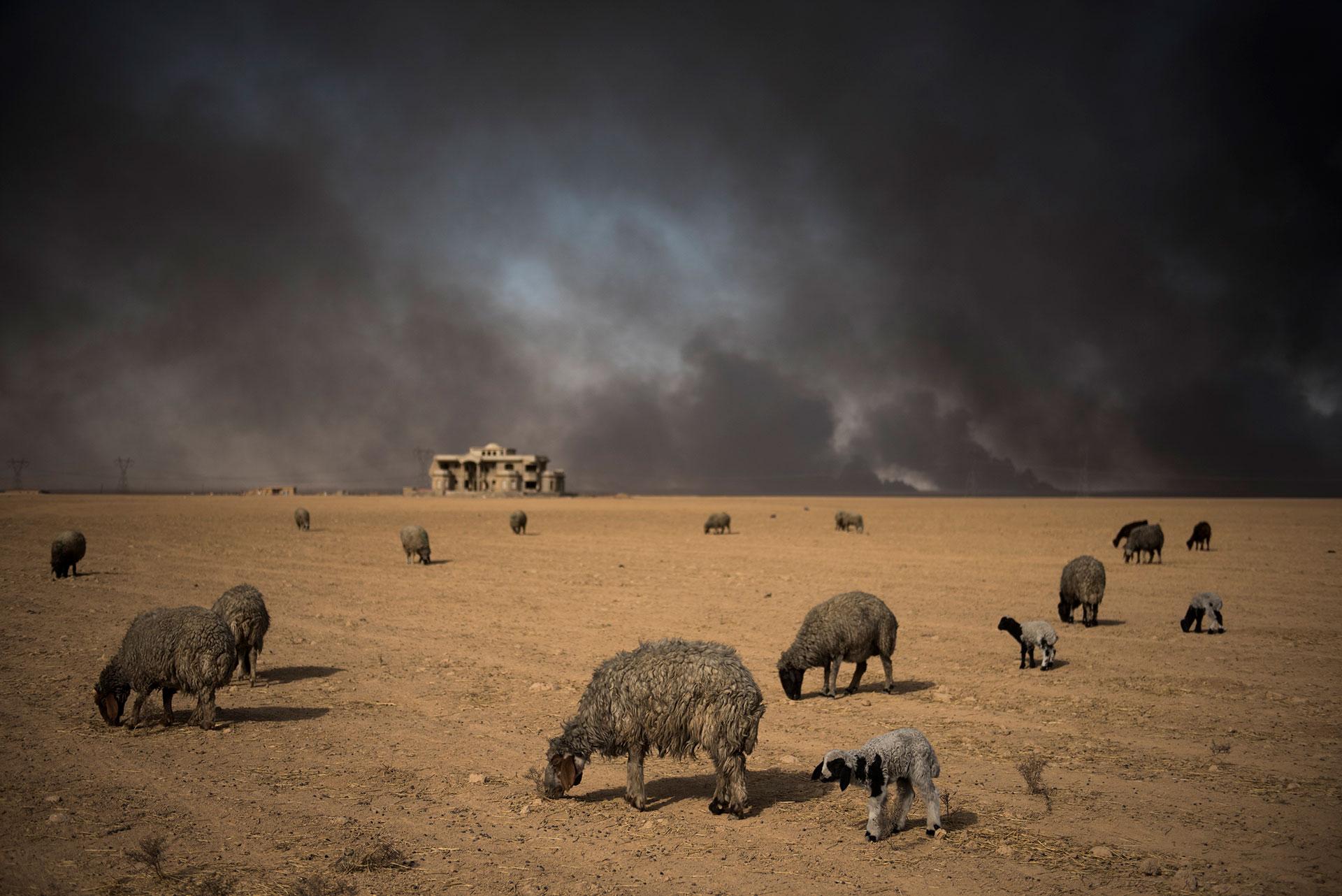 El incendio de yacimientos petrolíferos es parte de la estrategia del Estado Islámico para frenar la ofensiva en su contra (AFP)