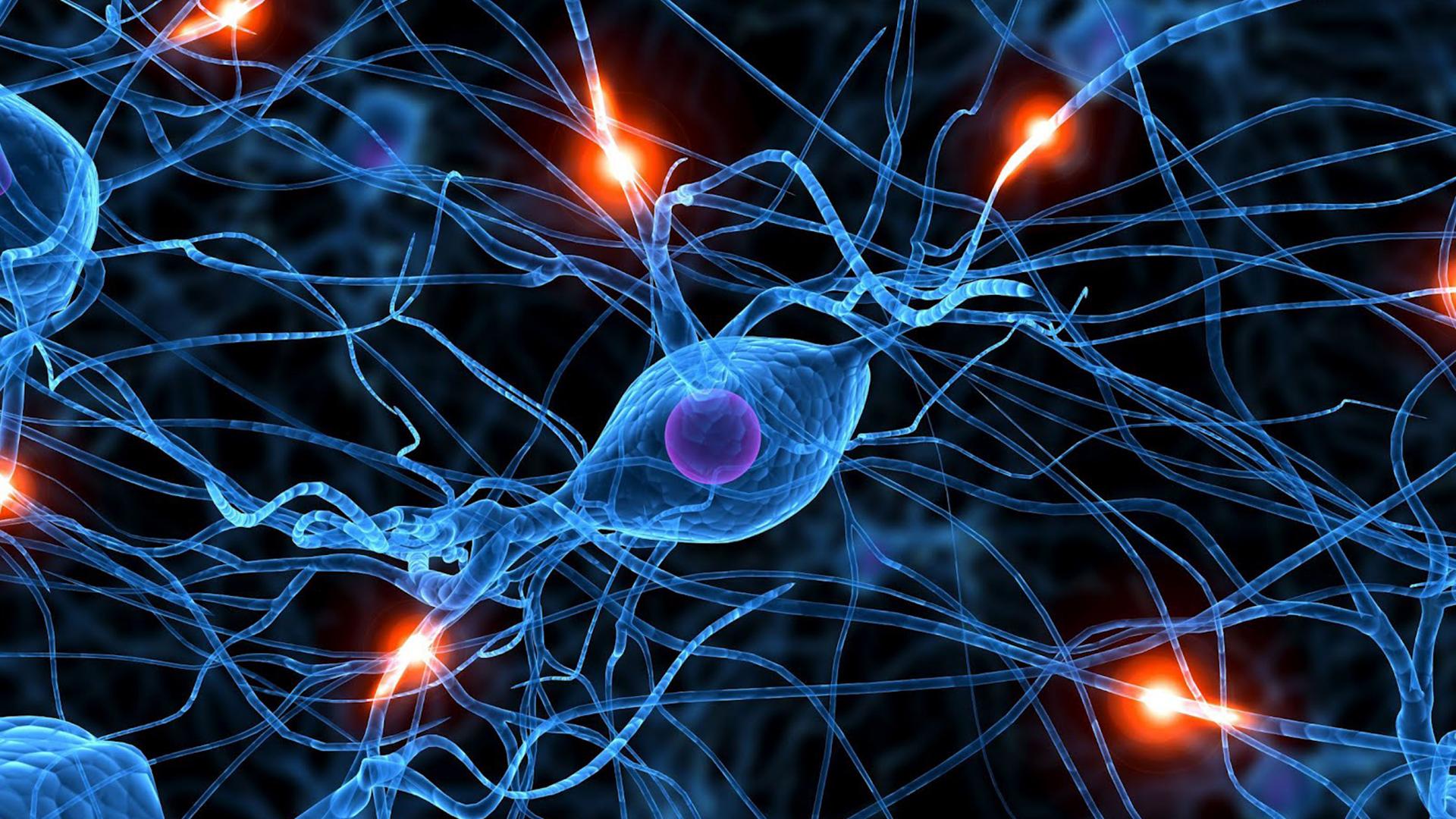 """Durand y su equipo observaron un """"salto"""" de onda a través de un corte que habían hecho en el corte de tejido cerebral, un fenómeno, que concluyeron, solo podía explicarse por el acoplamiento del campo eléctrico. Una y otra vez, la onda cerebral parecía saltar a través de la brecha vacía Foto: (Archivo)"""