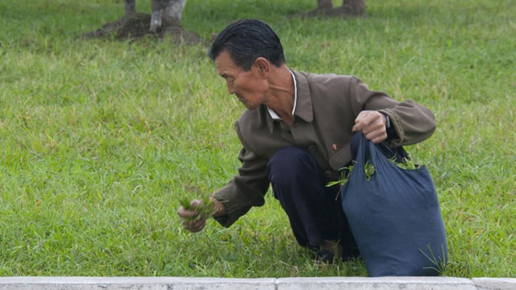 """El fotógrafo indicó que el hombre posiblemente recogía el pasto para alimentarse. """"Los guías se enfurecen con estas fotos"""""""