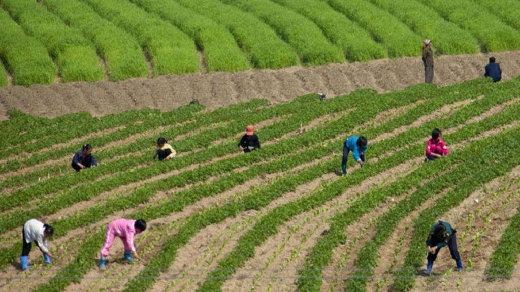Según explicó, cuando los tiempos son difíciles los niños deben trabajar en el campo