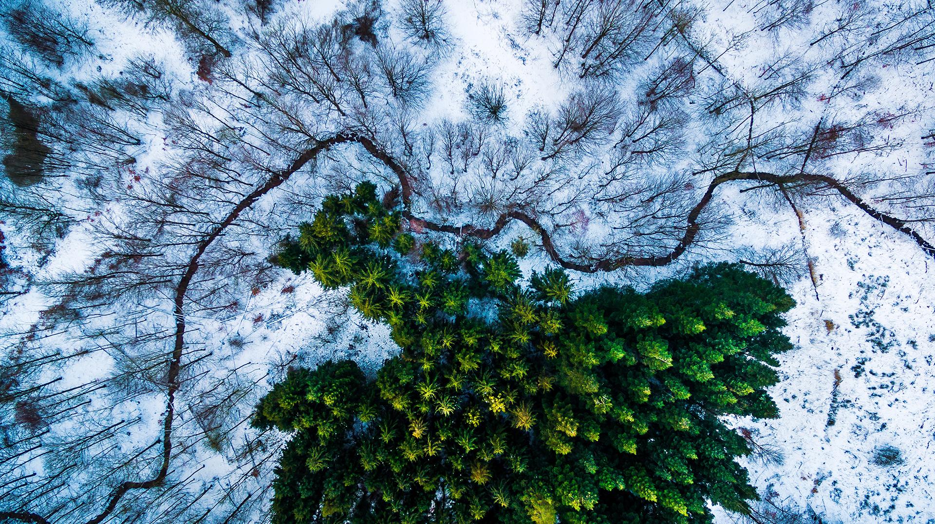 El bosque de Kalbyris, en Dinamarca, ganó el primer premio en Naturaleza y vida salvaje (Michael B. Rasmussen)