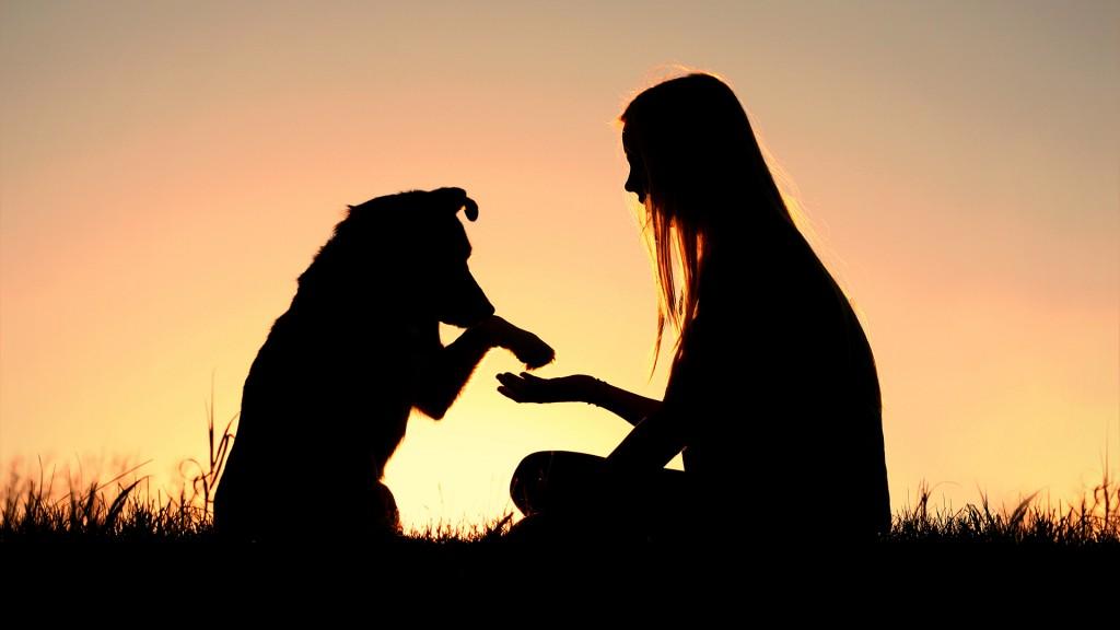 El estudio tuvo como fin conocer la contribución de la tenencia de mascotas a las redes de apoyo personal para la autogestión (iStock)