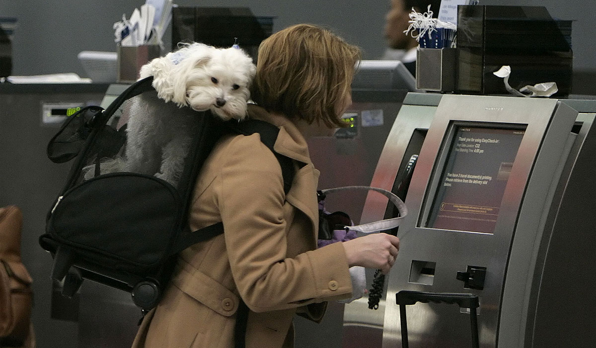 Varias líneas aéreas agregaron a sus servicios la admisión de animales en cabina (AP)