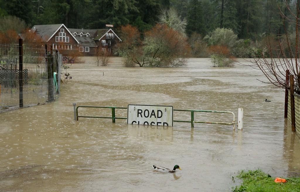 Un pato nada sobre los campos inundados por el desborde del río Ruso (AP)