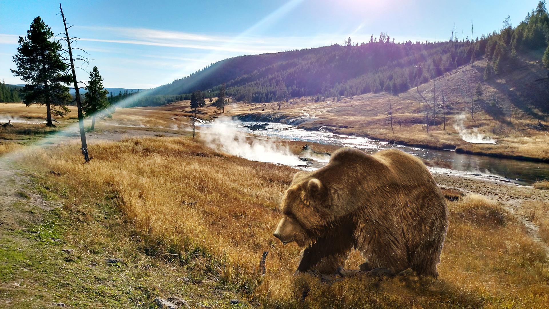 El parque de Yellowstone está situado sobre una meseta, a una altitud de 2400 metros sobre el nivel del mar, y alberga una gran variedad de animales salvajes como osos pardos, lobos, bisontes y alces