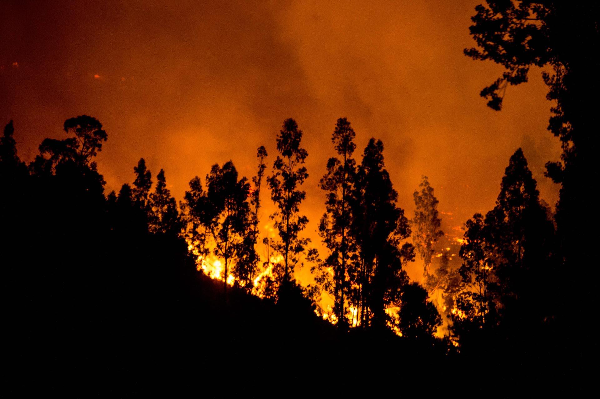 Los daños entre la fauna y la flora, en particular del bosque nativo, son también incalculables, según los expertos