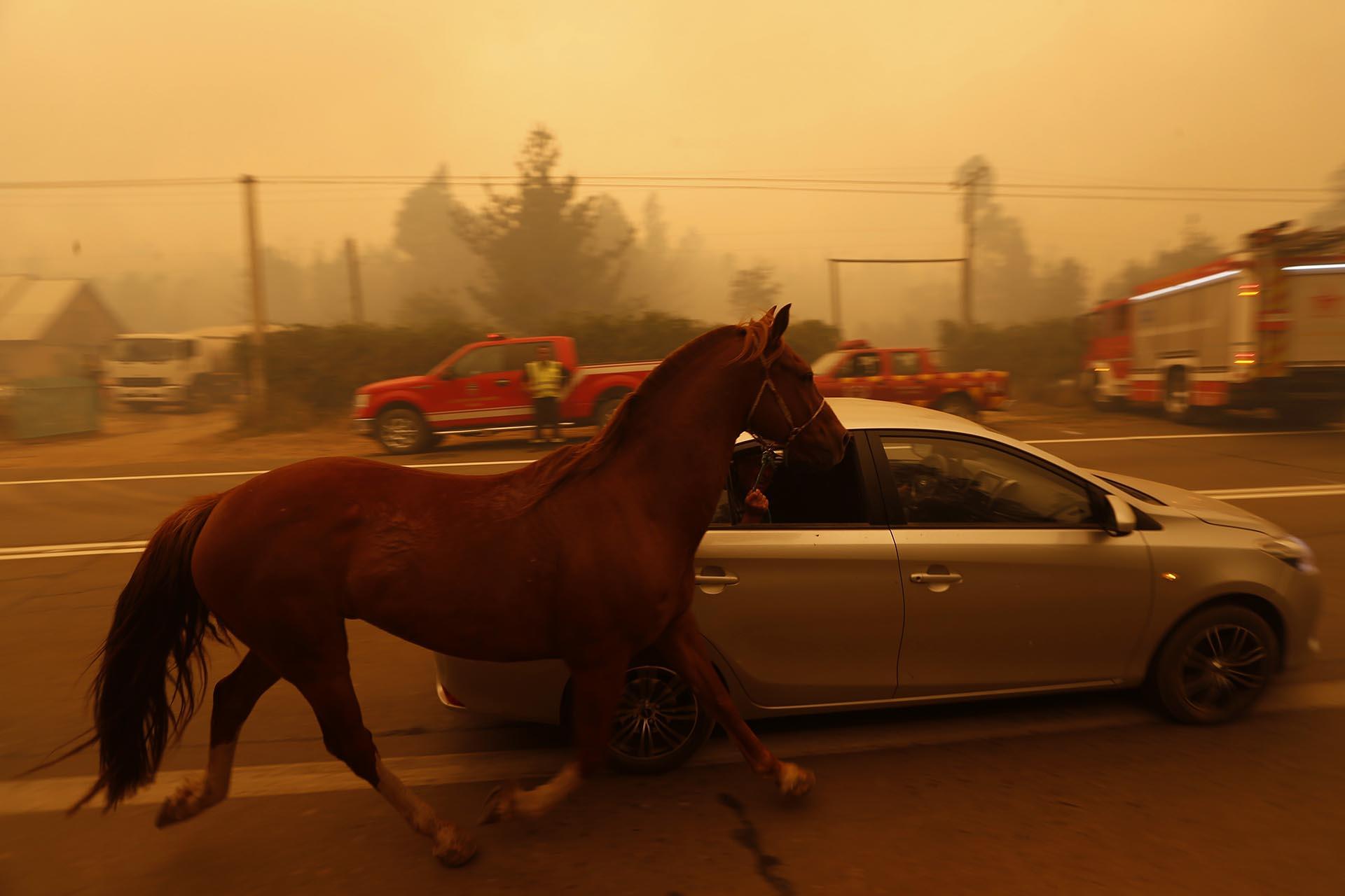 Aún hay 53 incendios activos, 48 fueron controlados y 2 extinguidos, según el último reporte de la Corporación Nacional Forestal (Conaf)