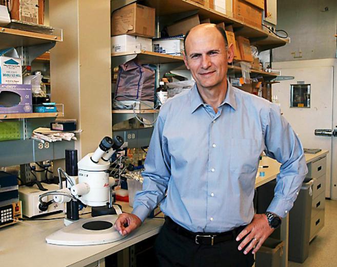 """El científico Juan Carlos Izpisúa asegura que los hallazgos de estas células madres que se desarrollan en ratas y embriones de cerdo son """"una esperanza"""" para el avance de la ciencia y la medicina."""