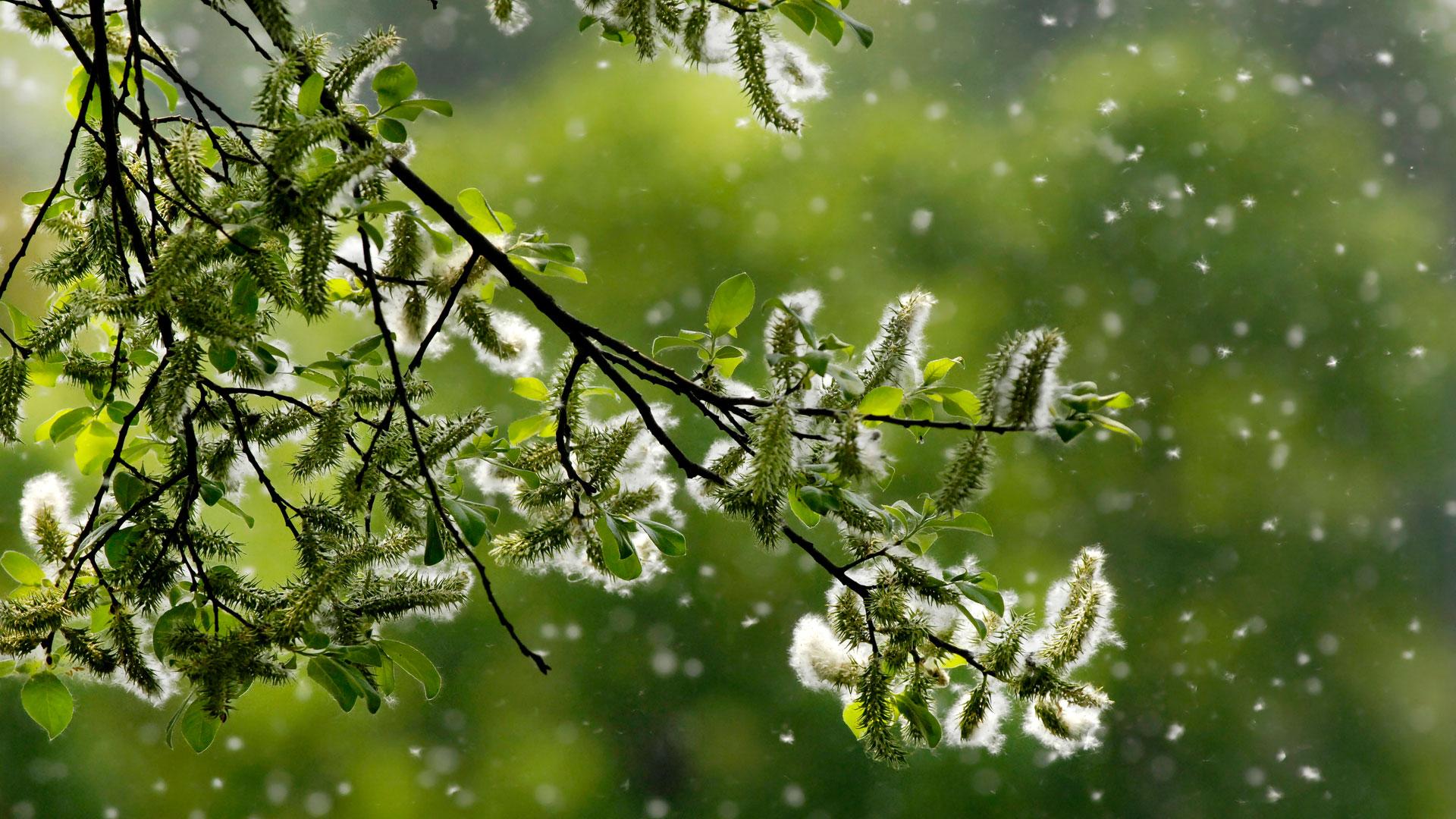 El polen es uno de los principales causantes en verano (iStock)