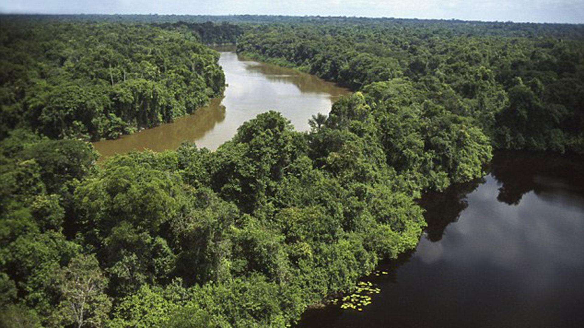 El amazonas se ve afectado por más razones relacionadas a la defosteración (Istock)