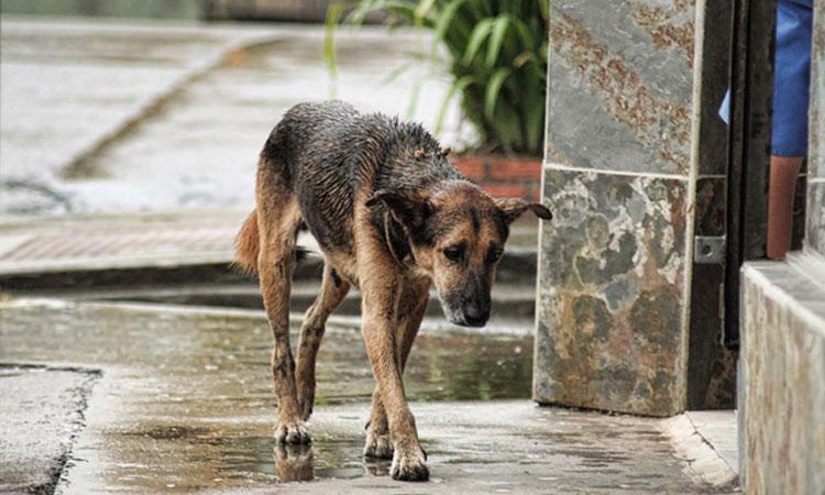 prohibir-sacrificio-animales-domesticos-abandonados