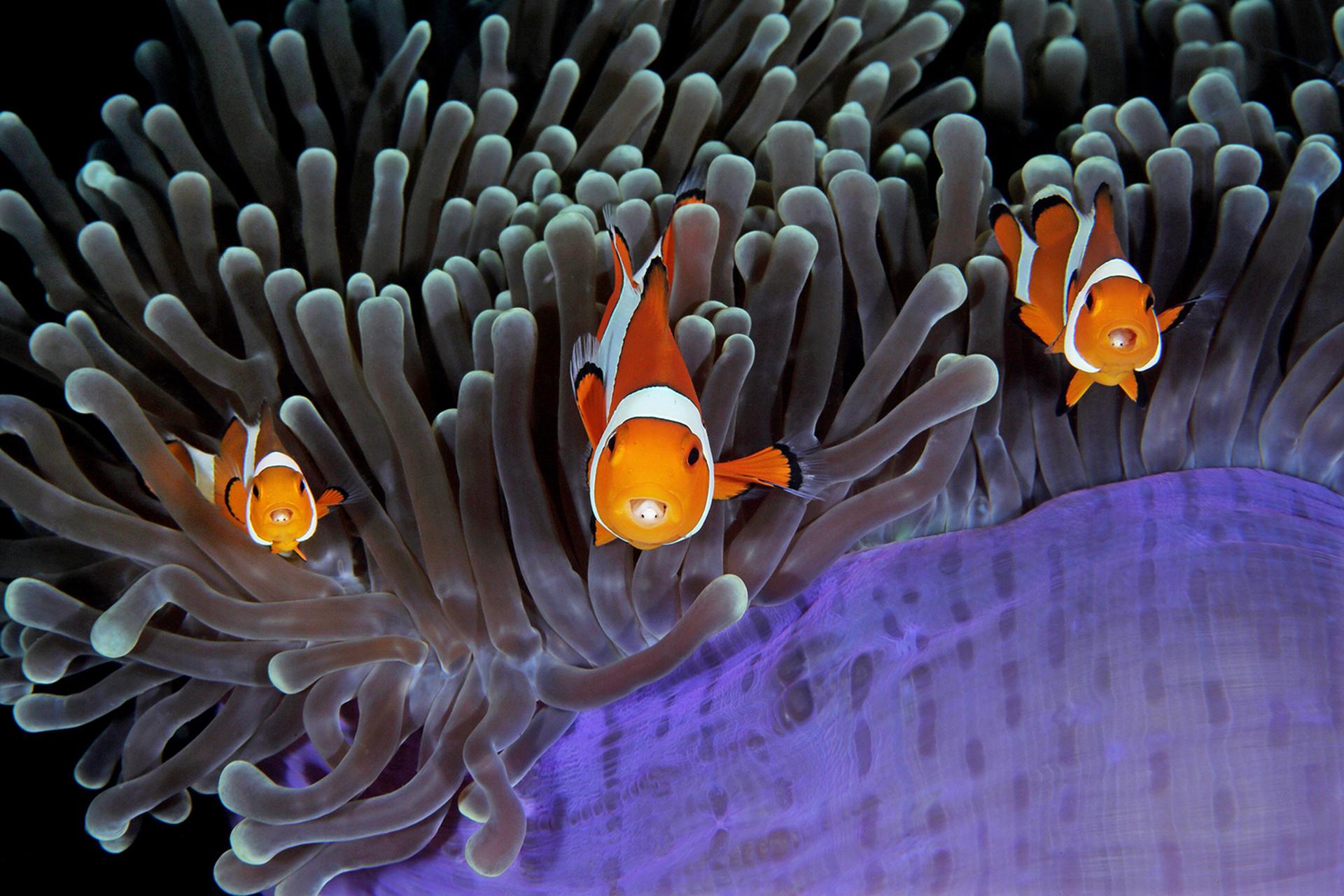 Simpáticos peces de colores fotografiados cerca de Lembeh, Indonesia, el 2 de diciembre de 2016 por Qing Lin