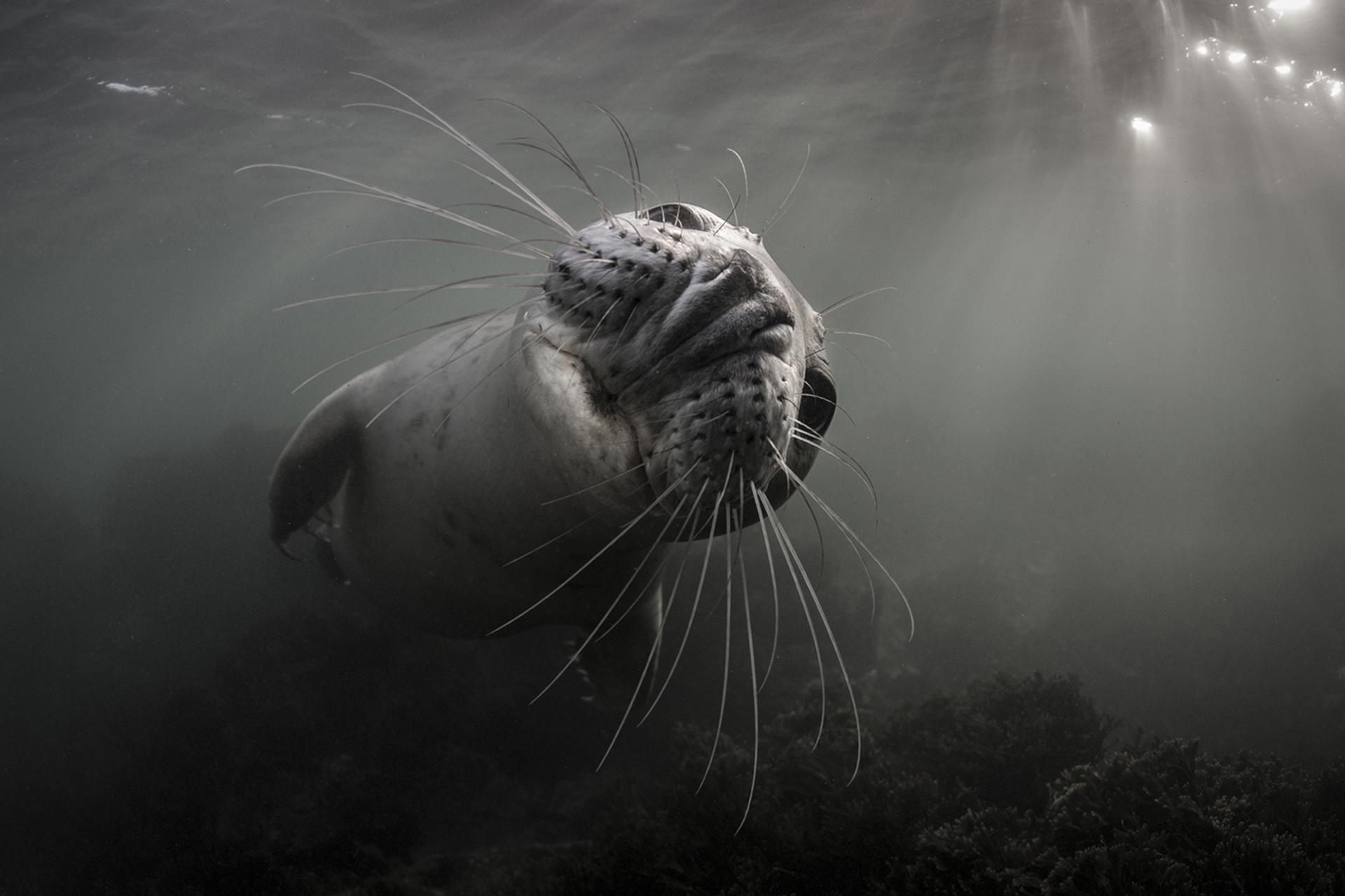 En noviembre pasado, Ellen Cuylaerts tomó esta foto cuando visitó la mayor colonia de focas grises del Reino Unido