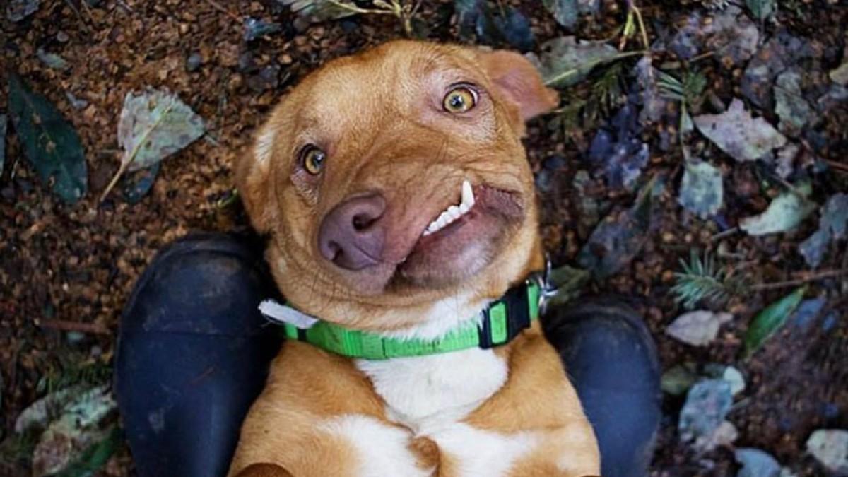 La historia de Picasso, un perro muy particular que es furor en Instagram -  Infobae