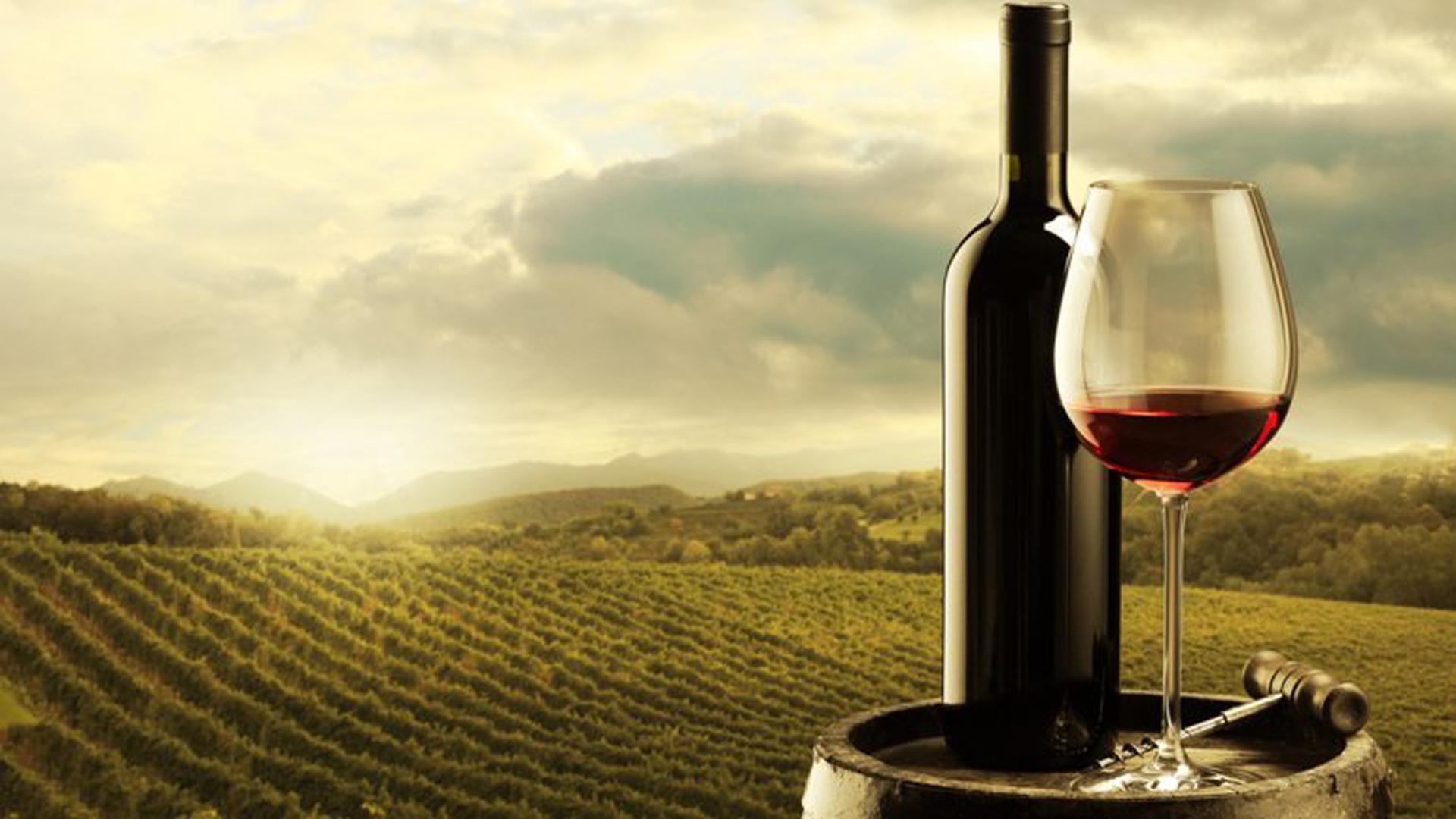 Durante varios días se reúnen para eligir entre más de 1000 muestras de vinos procedentes de más de cuarenta países de todo el mundo