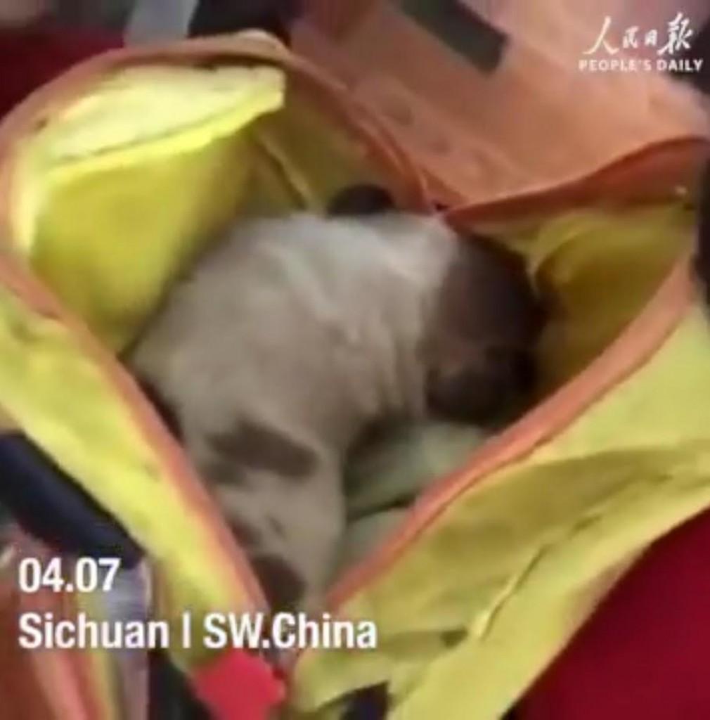 El cachorro encontrado en la calle parece estar durmiendo plácidamente dentro de la mochila de su nueva dueña (Peoples Daily)