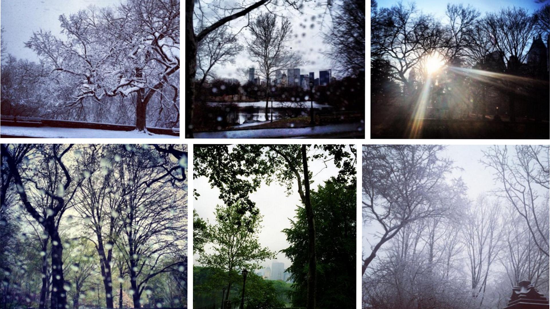 Fotos compartidas de lo que parecía ser una caminata en Central Park ( Twitter Melania Trump)