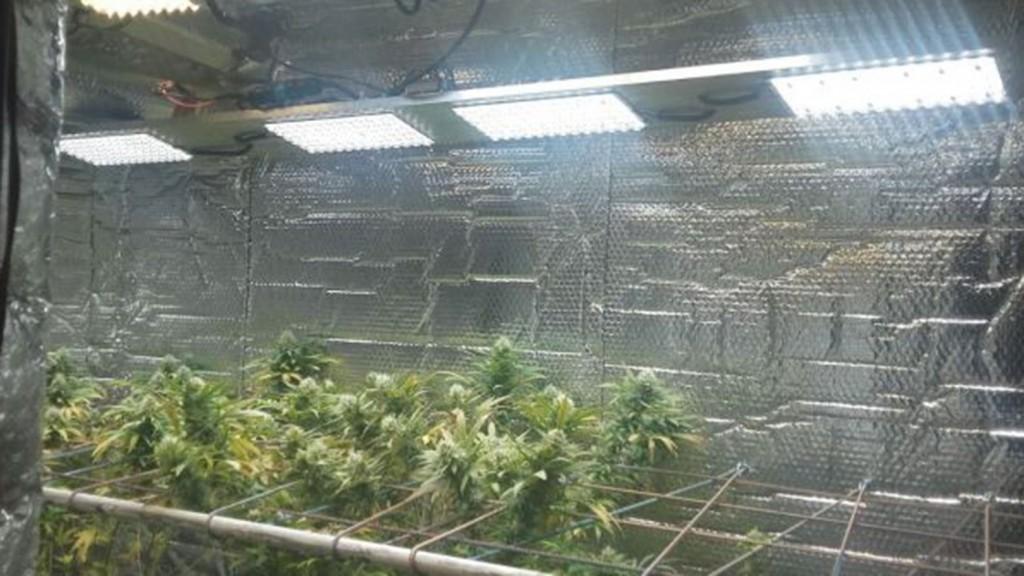Allanamiento en un invernadero de marihuana de alta tecnología en Campana