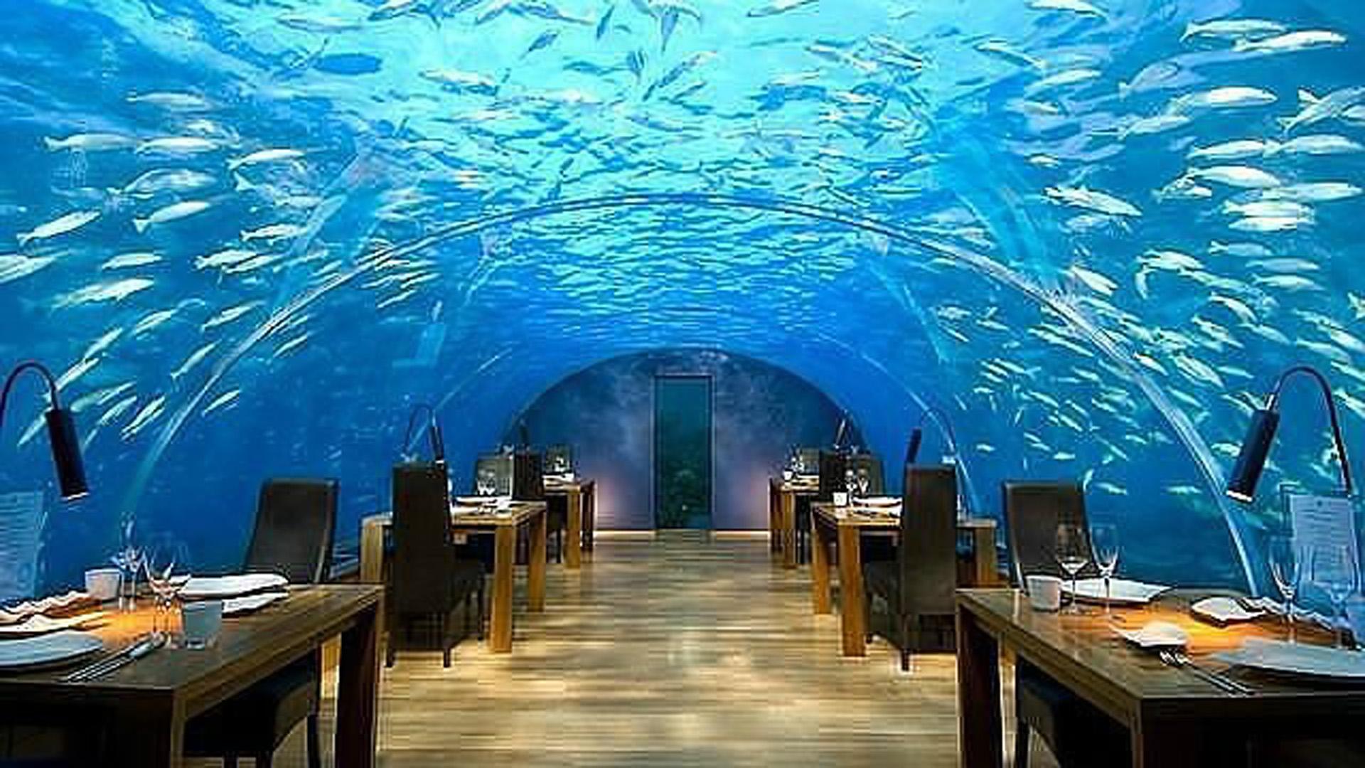 Una experiencia única, almorzar observando el inmenso océano y sus animales
