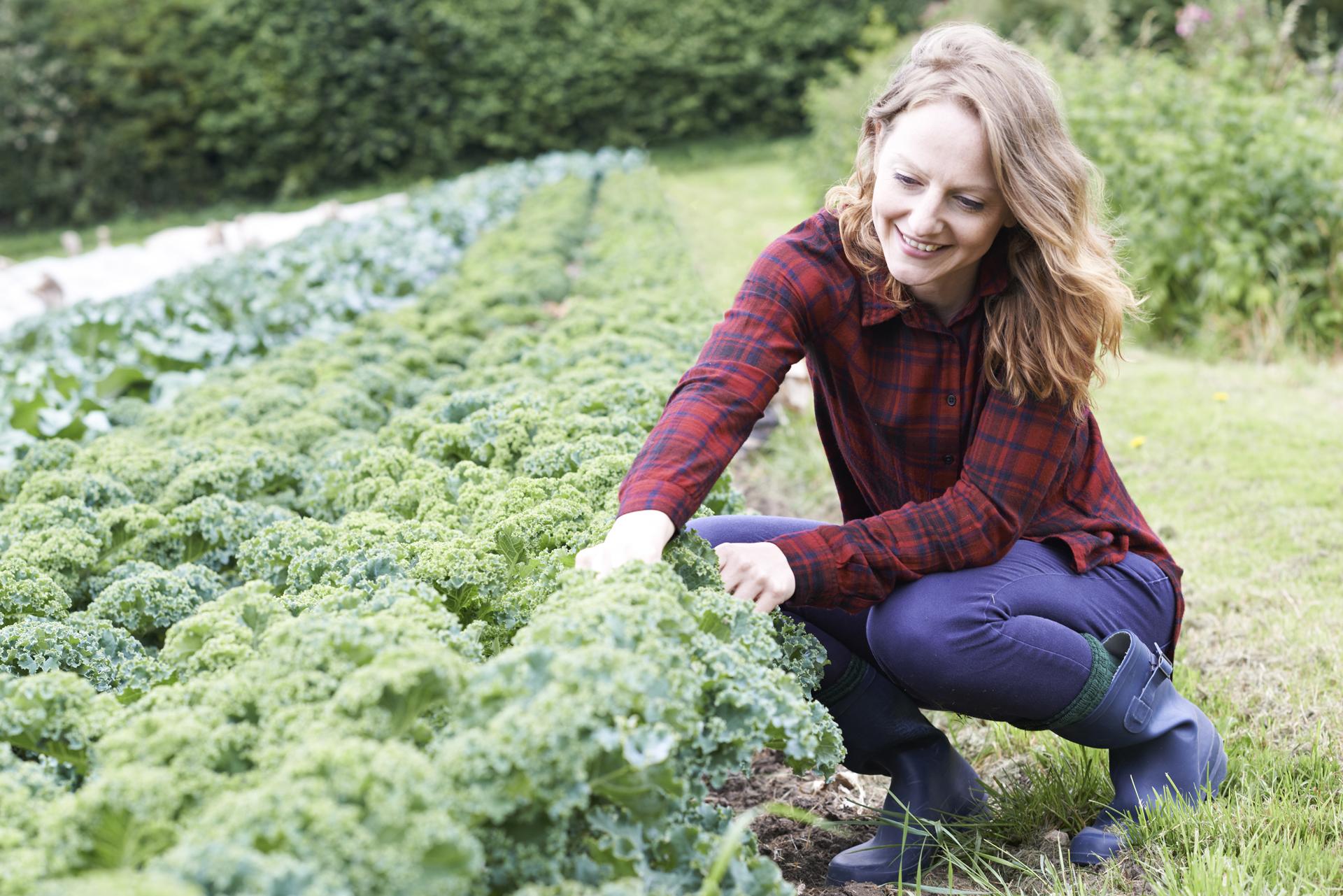 Uno de los mayores nutrientes que tiene estas hortaliza es su alta concentración de Vitaminas K (iStock)