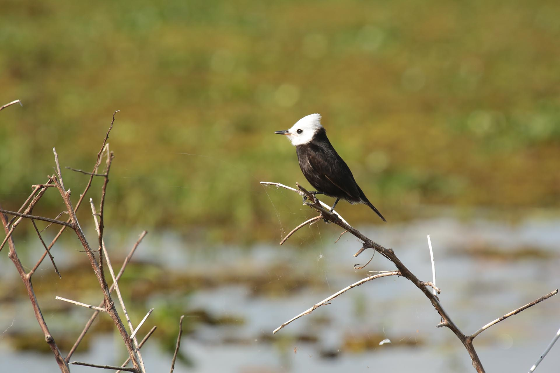 Es una de las mayores reservas de vida silvestre del país. Justamente, hasta el 28 de mayo se realiza una importante feria en Colonia Carlos Pellegrini que reúne a profesionales y aficionados del avistaje de aves (en Corrientes hay más de 350 especies), de la naturaleza y del ecoturismo