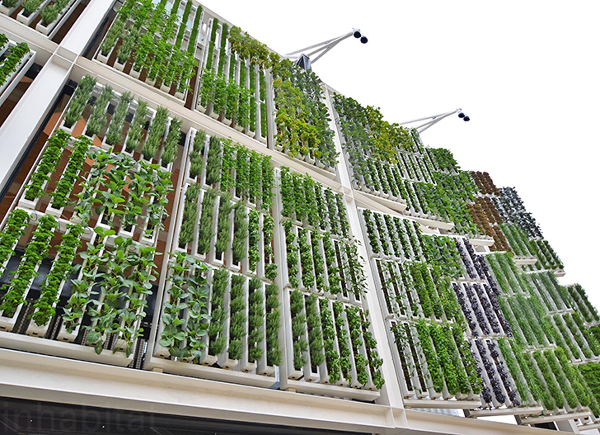 Otra posibilidad radica en edificios vidriados con paneles solares en su cubierta donde cada nivel forma parte de una completo invernadero lleno de vegetales
