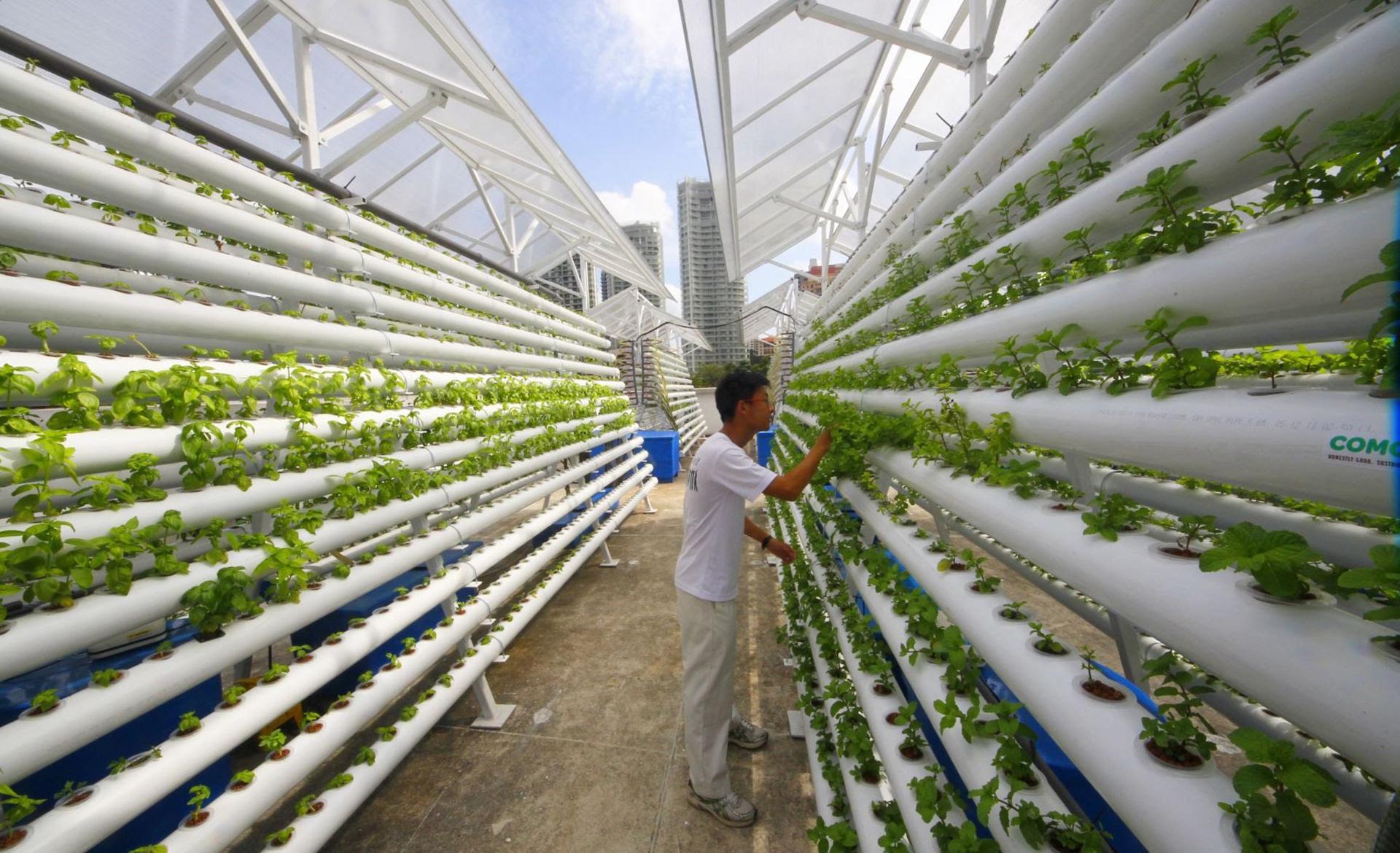 La agricultura urbana en edificios ofrece la posibilidad de otorgar el 15% como mínimo de los suministros básicos de las ciudades más urbanizadas del mundo