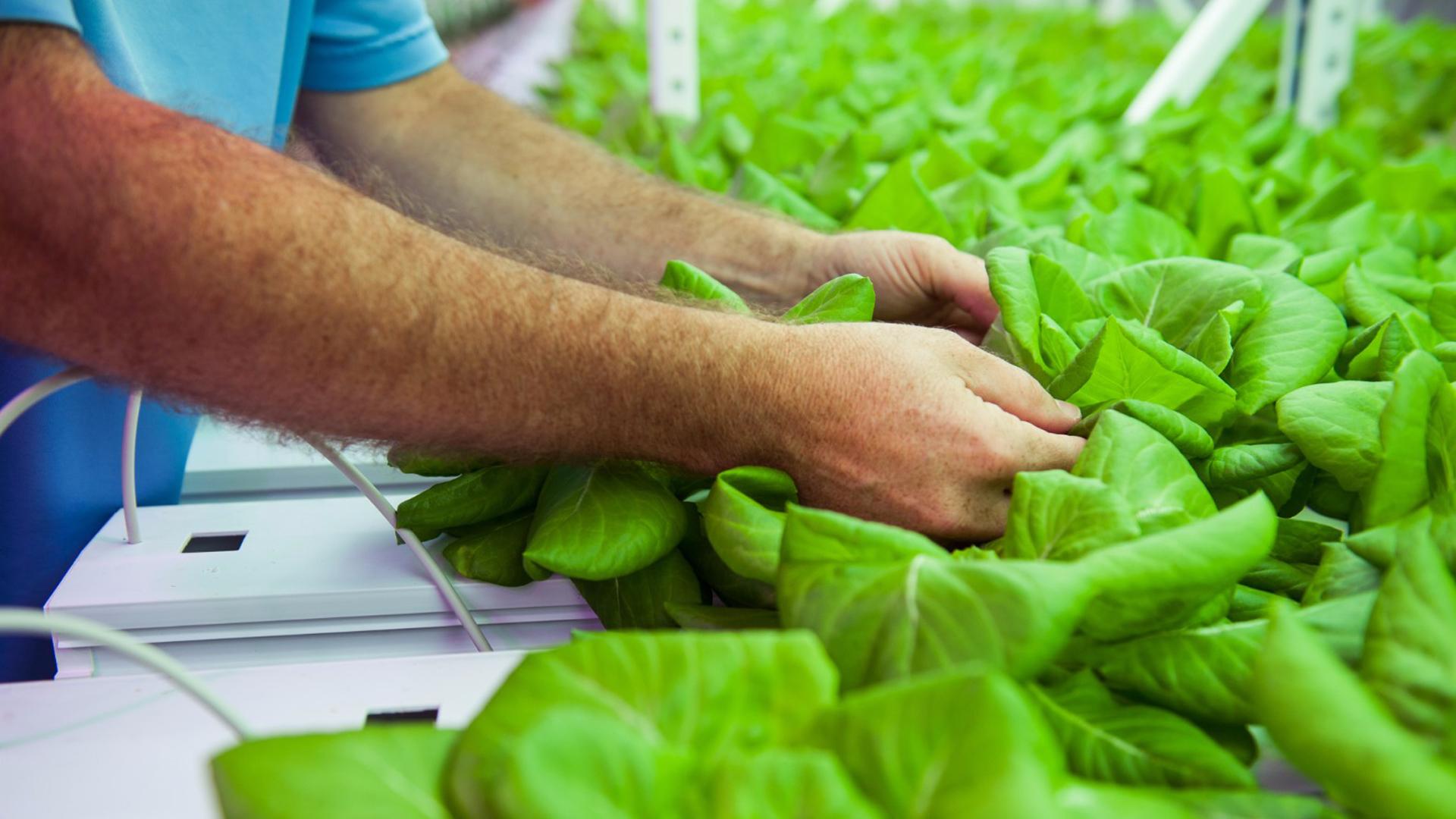 Se estima que para el año 2050 será necesario producir un 70% más de alimentos para 3000 millones de personas adicionales