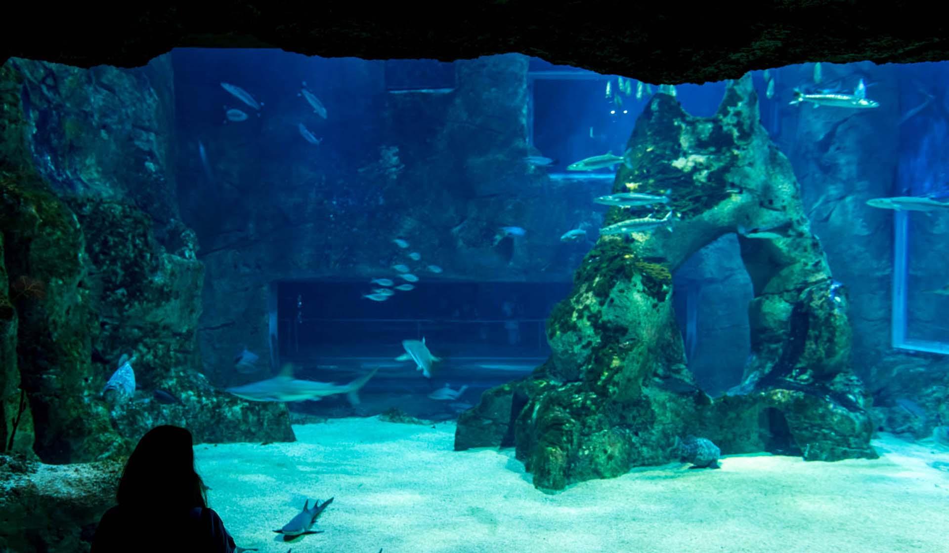 El aquarium, uno de los puntos más visitados por los turistas