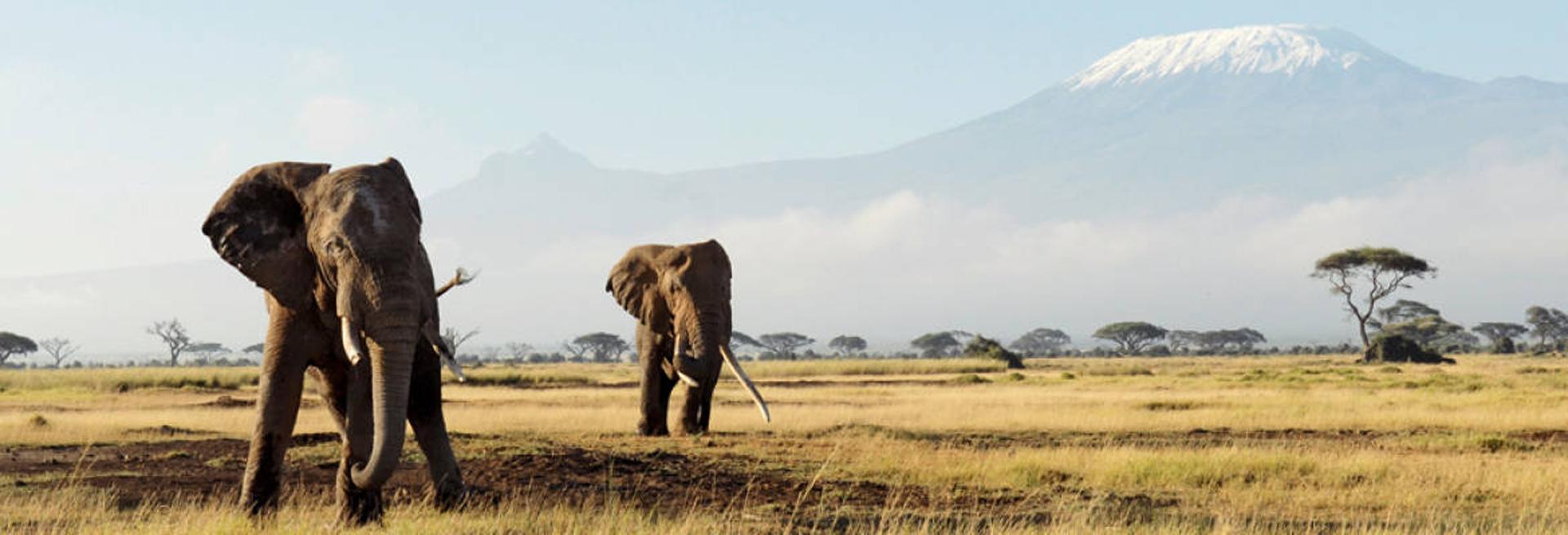 La atracción principal, los safaris más aventureros del mundo