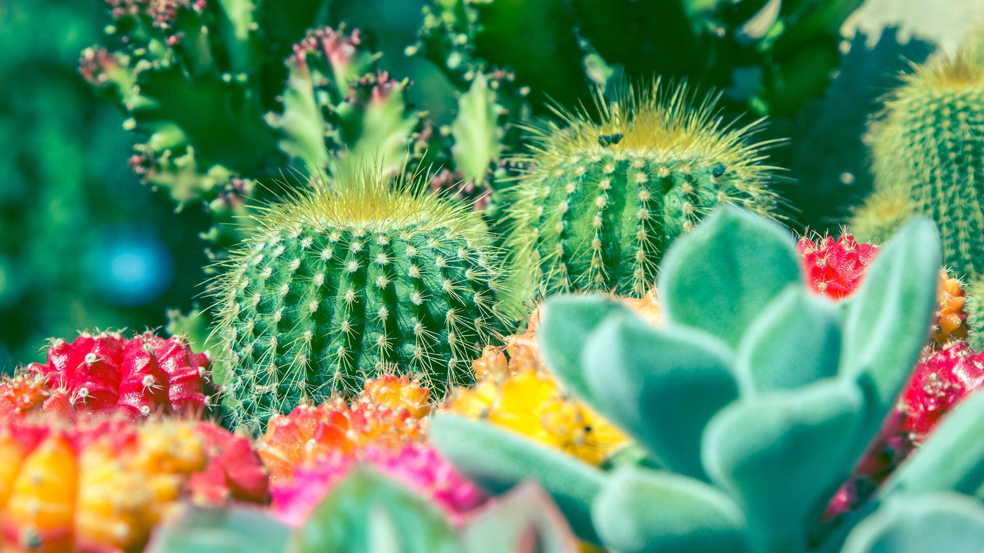 Para los hogares con niños se recomienda decorar con suculentas y no con cactus (istock)