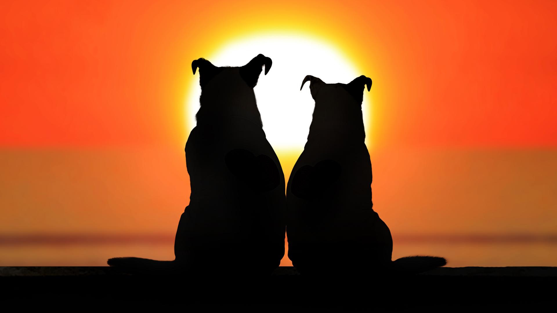 Cuenta con más de 5 millones de reproducciones y su popularidad en Facebook, demuestra es amor de estos dos amigos caninos inseparables (iStock)