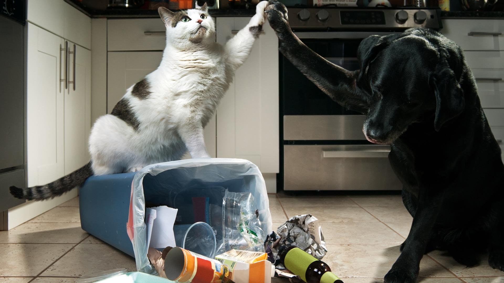 La presencia de mascotas no ayuda a generar un lugar higiénico (Istock)