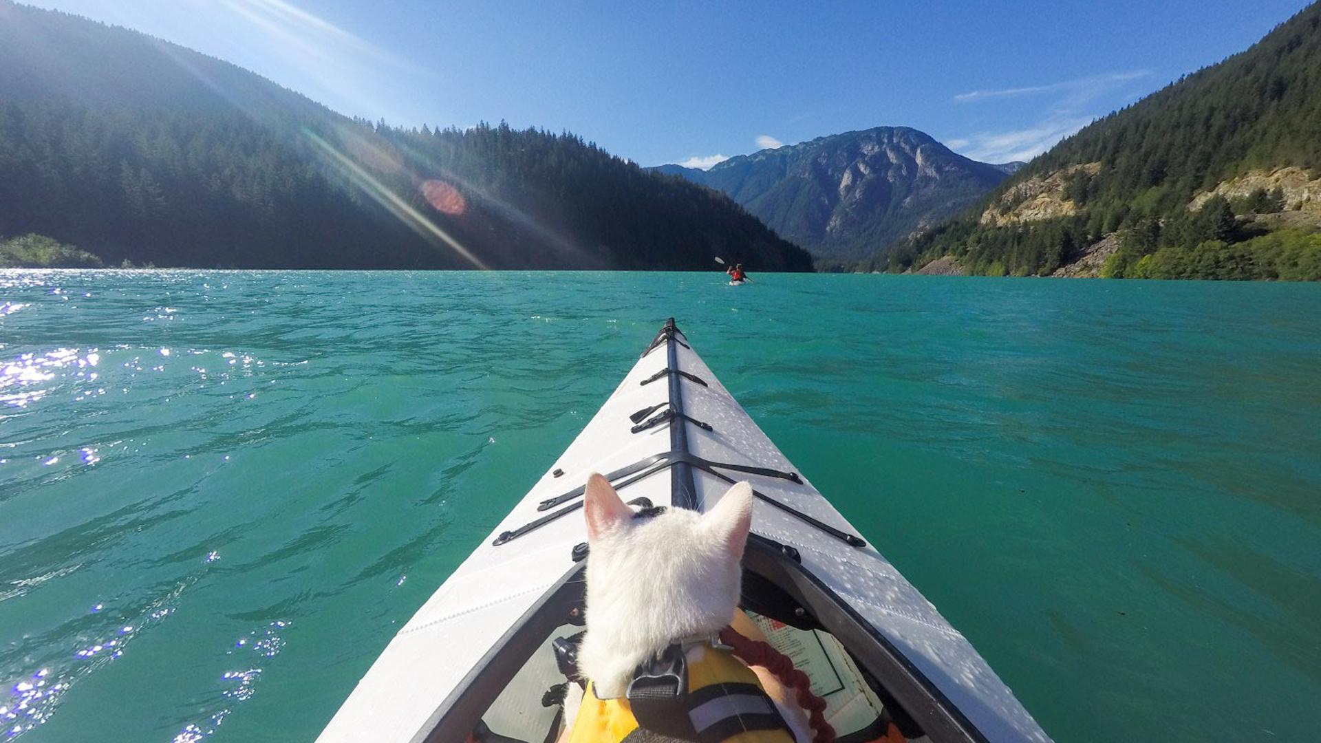 Muchos de los sitios visitados permiten el ingreso de mascotas, lo que le dio la posibilidad a Vladimir de practicar Kayak en más de una oportunidad