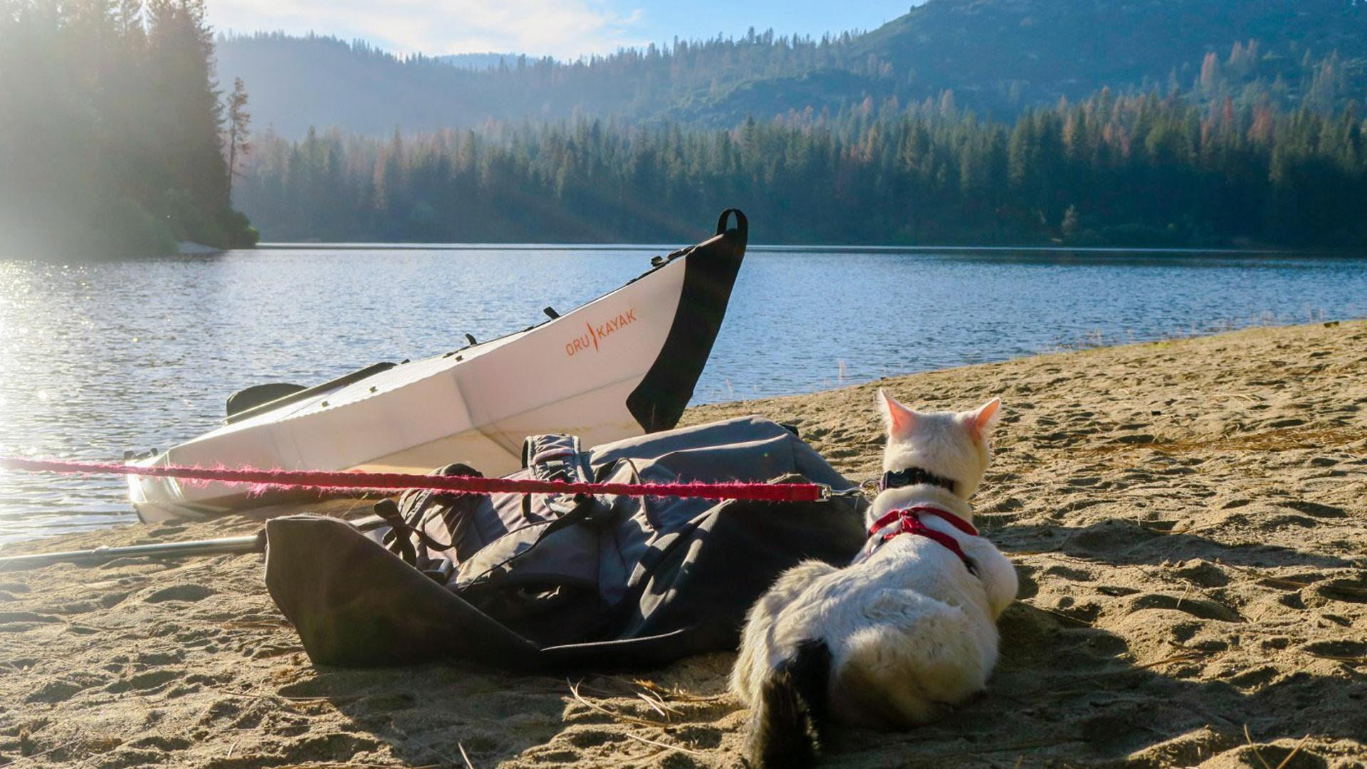 Disfruta en profundidad de descansar al sol y contemplar el paisaje mientras piensa con qué aventura se topará mañana (adventurecats)