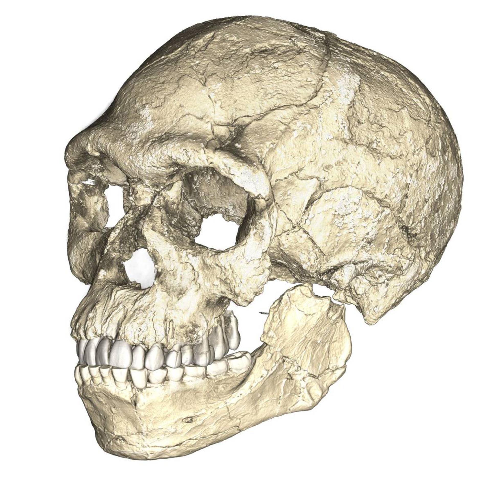Reconstrucción del cráneo a partir de las piezas encontradas