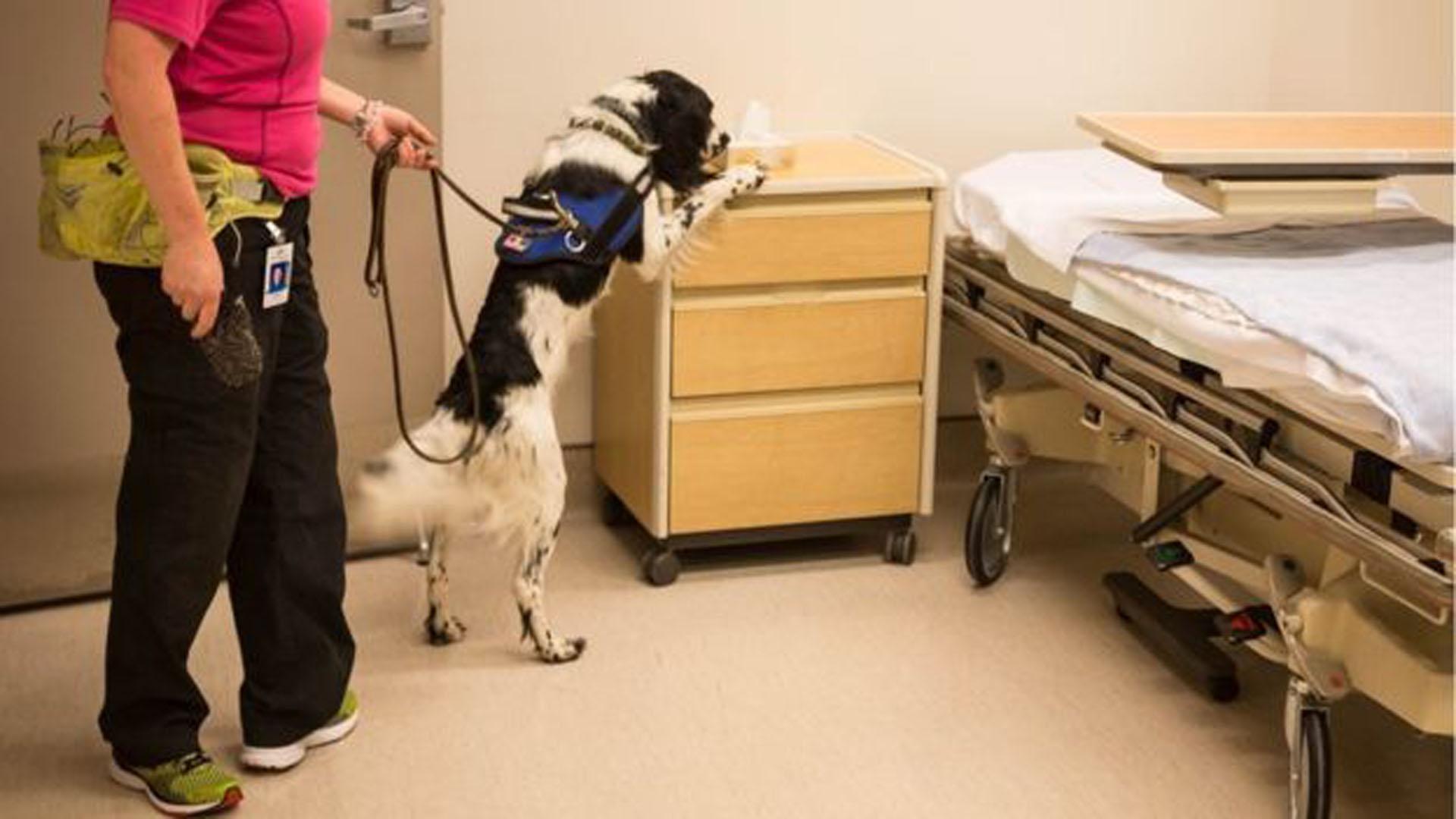 Angus, trabaja cuatro días a la semana en el hospital de Vancuver