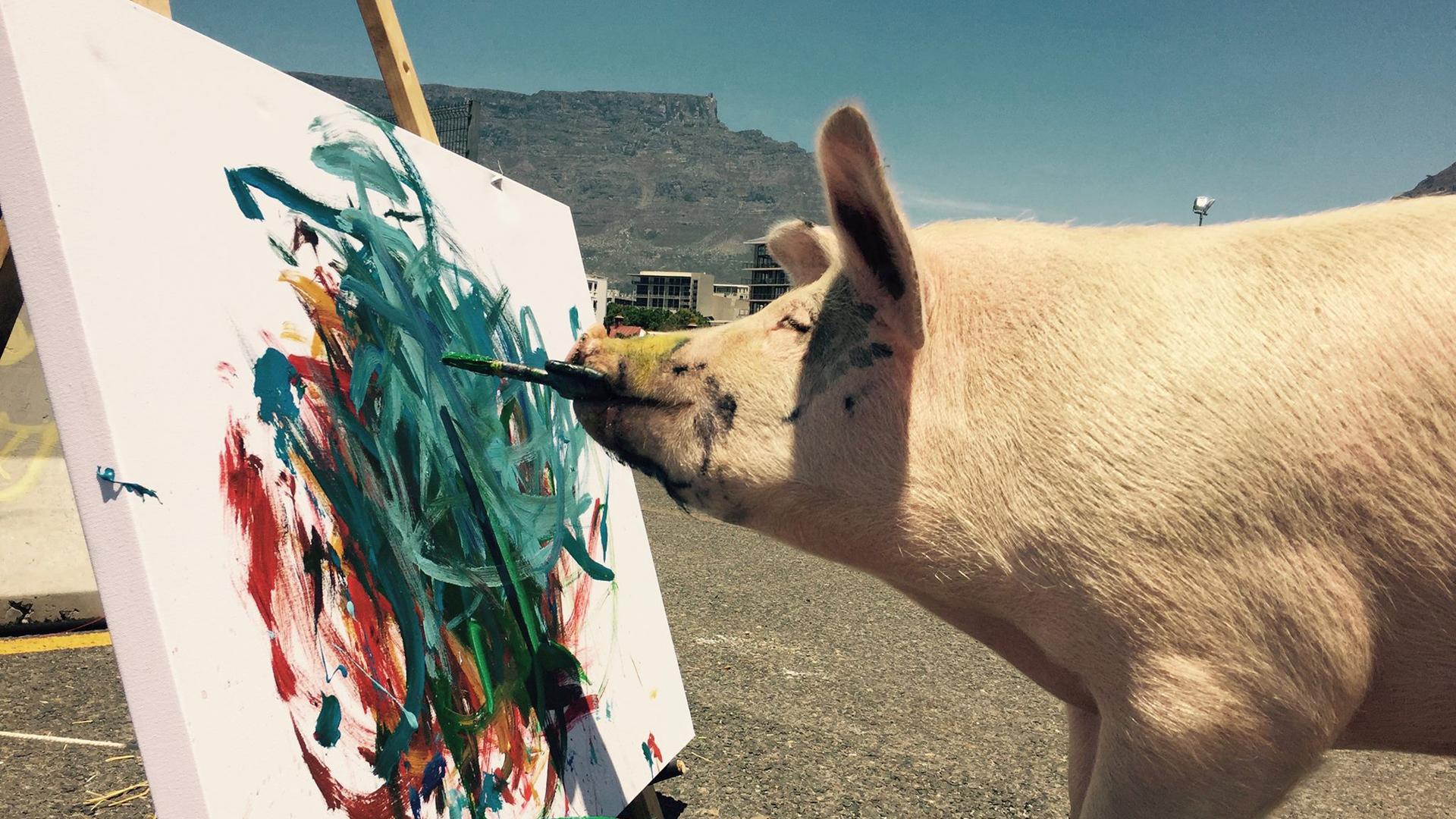 Pigcasso, la cerda que encontró su veta artística gracias a la ayuda de su dueña (Instagram Pigcasso)