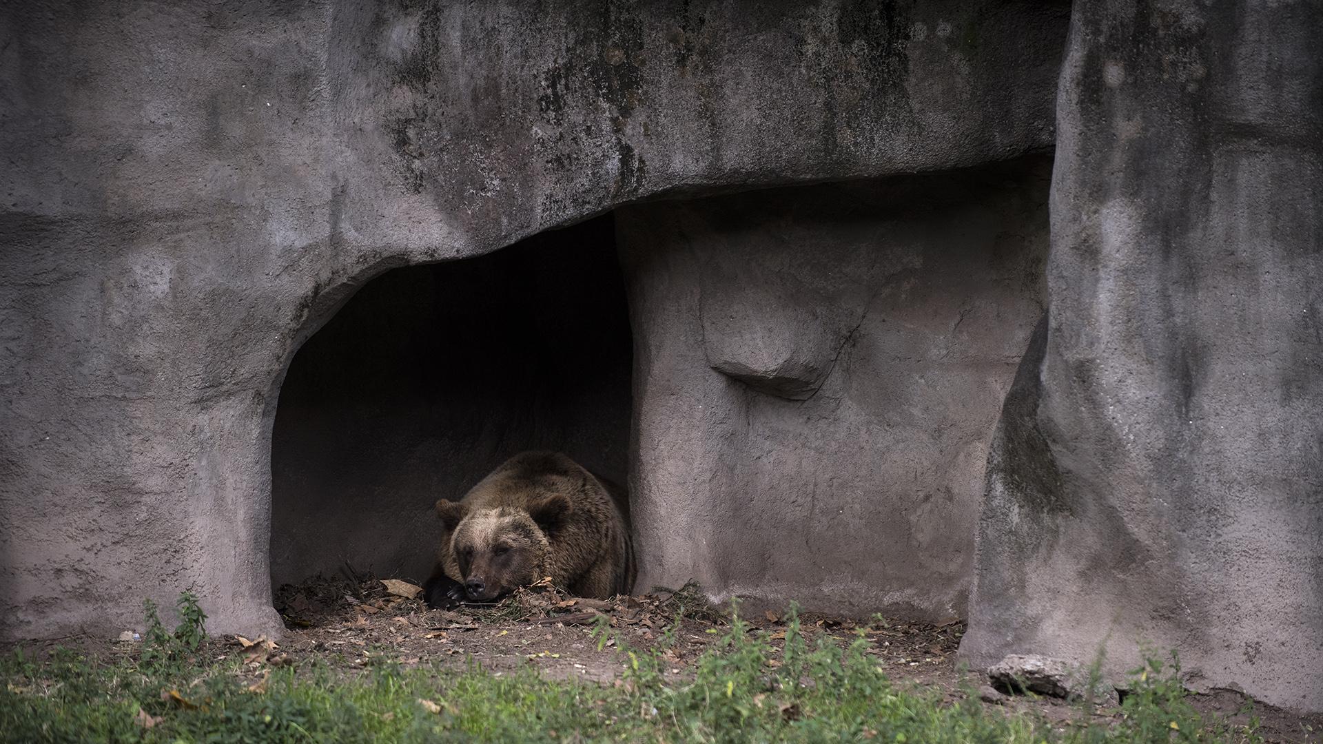 El destino de los osos es incierto. (Adrián Escandar)