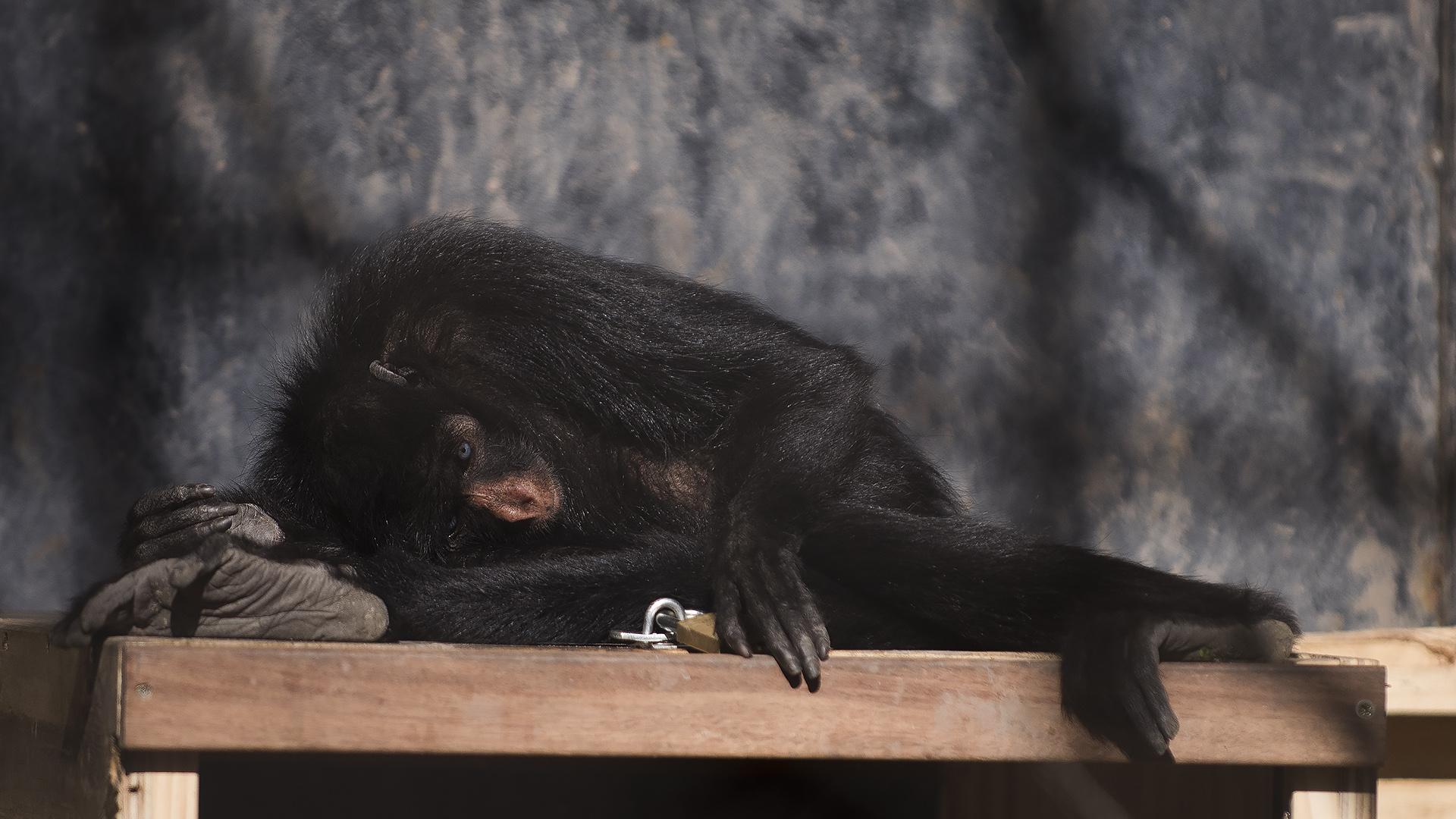 Las autoridades del Ecoparque no se apresuran a dar fechas para los traslados de los animales. Muchos nacieron en cautiverio. (Adrián Escandar)