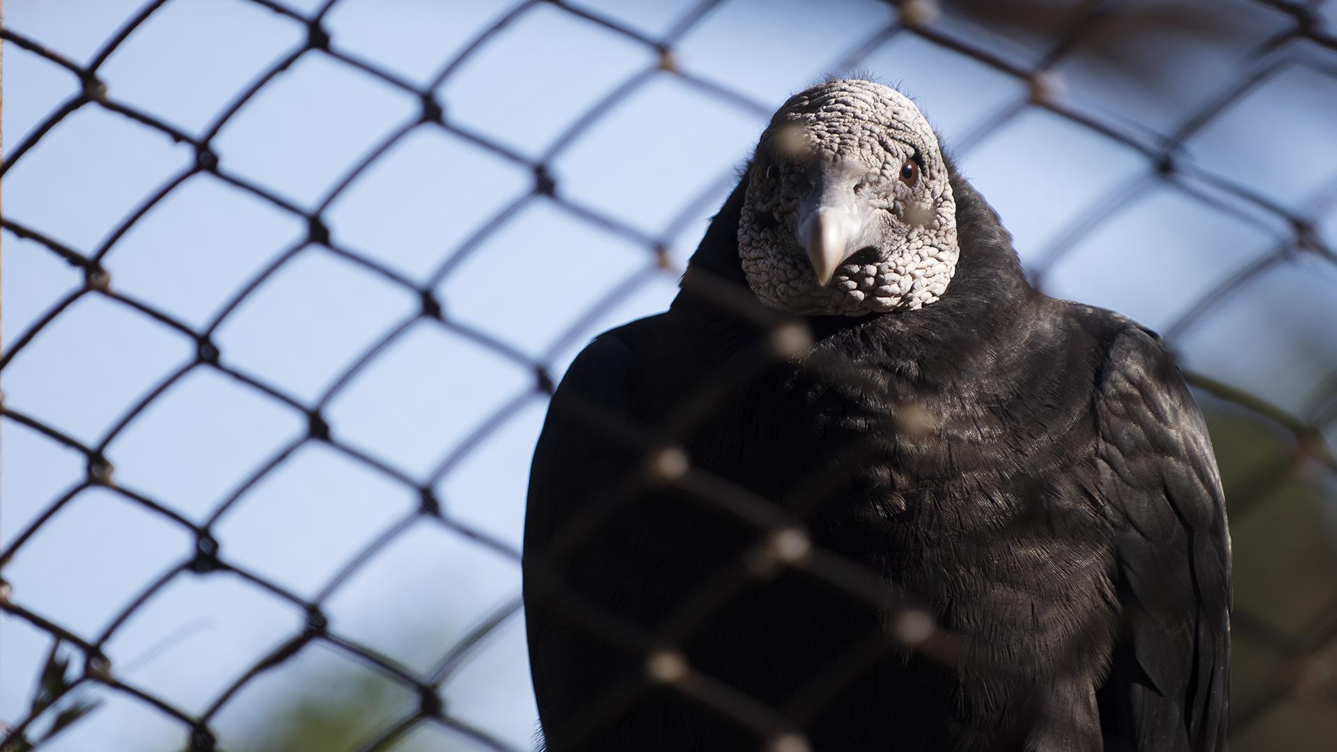 Según las autoridades del Ecoparque, 350 animales fueron liberados, entre ellos varias aves. Otras, esperan su turno. (Adrián Escandar)