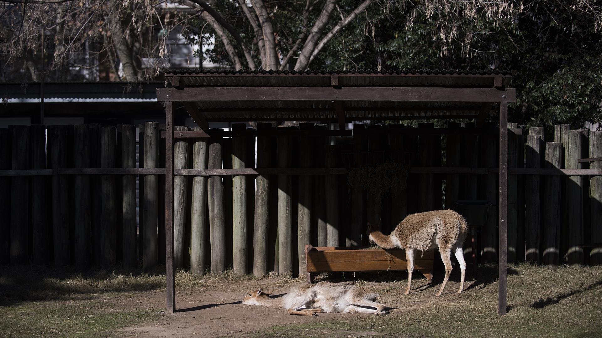 Los cuidadores y profesionales que trabajan en el Ecoparque también estimulan a los animales. Algunos toman sol después del desayuno. (Adrián Escandar)
