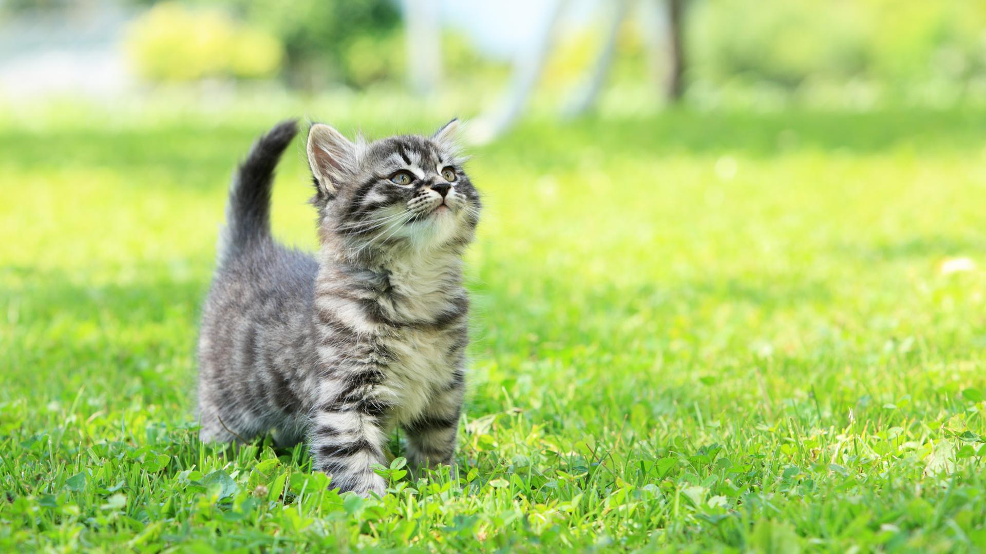 Mediante la posición en alto de la cola del el gato manifiesta su felicidad plena y lo mucho que extrañó a sus dueños (iStock)