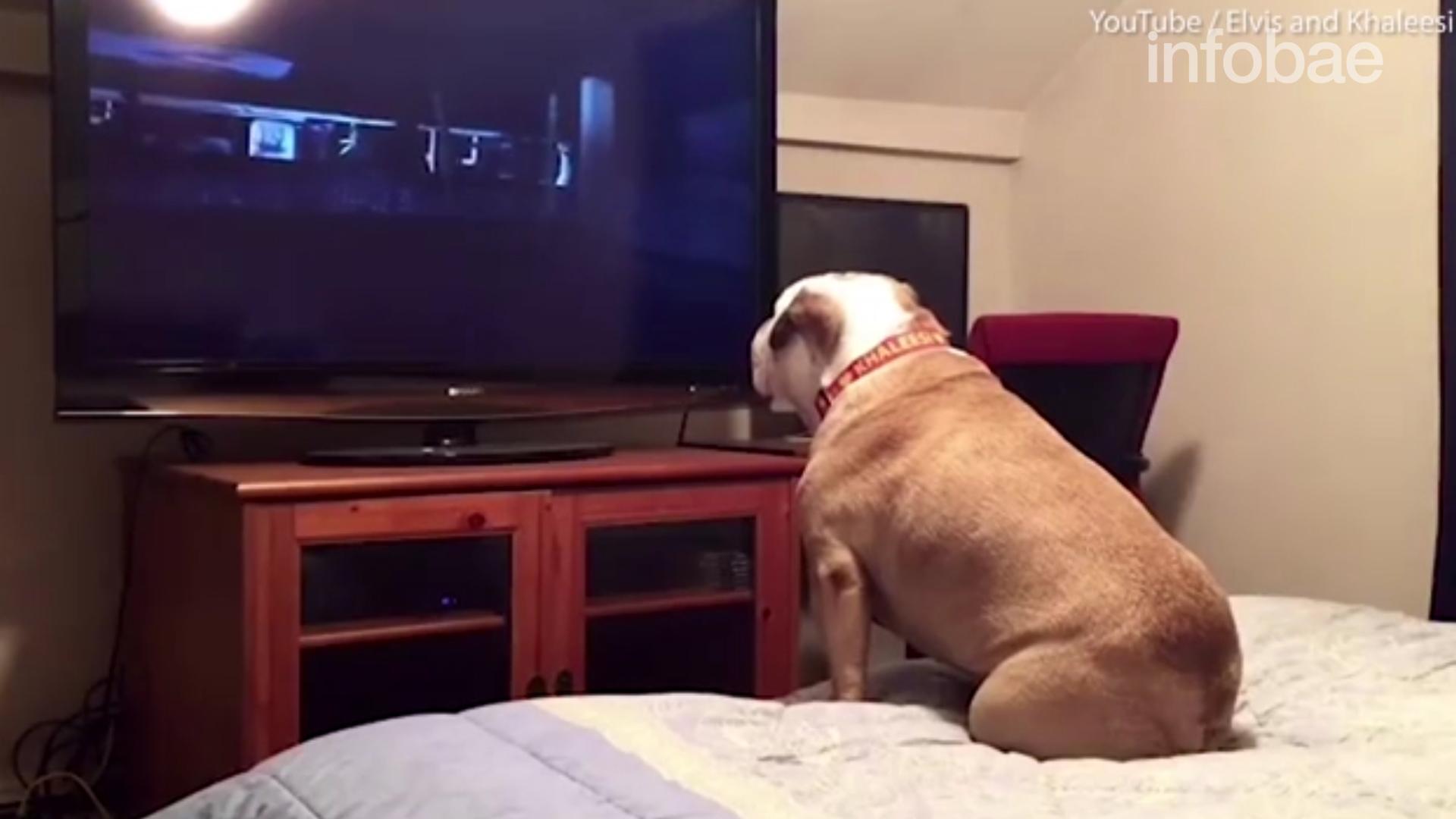 Hasta los perros tienen hoy su propio canal de entretenimiento, denominado Dog TV, el cual ya es furor en Estado Unidos