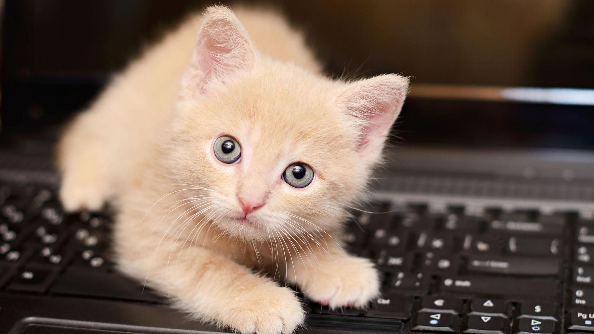 """Uno de los juegos más comunes en los gatitos es el de la """"caza"""""""
