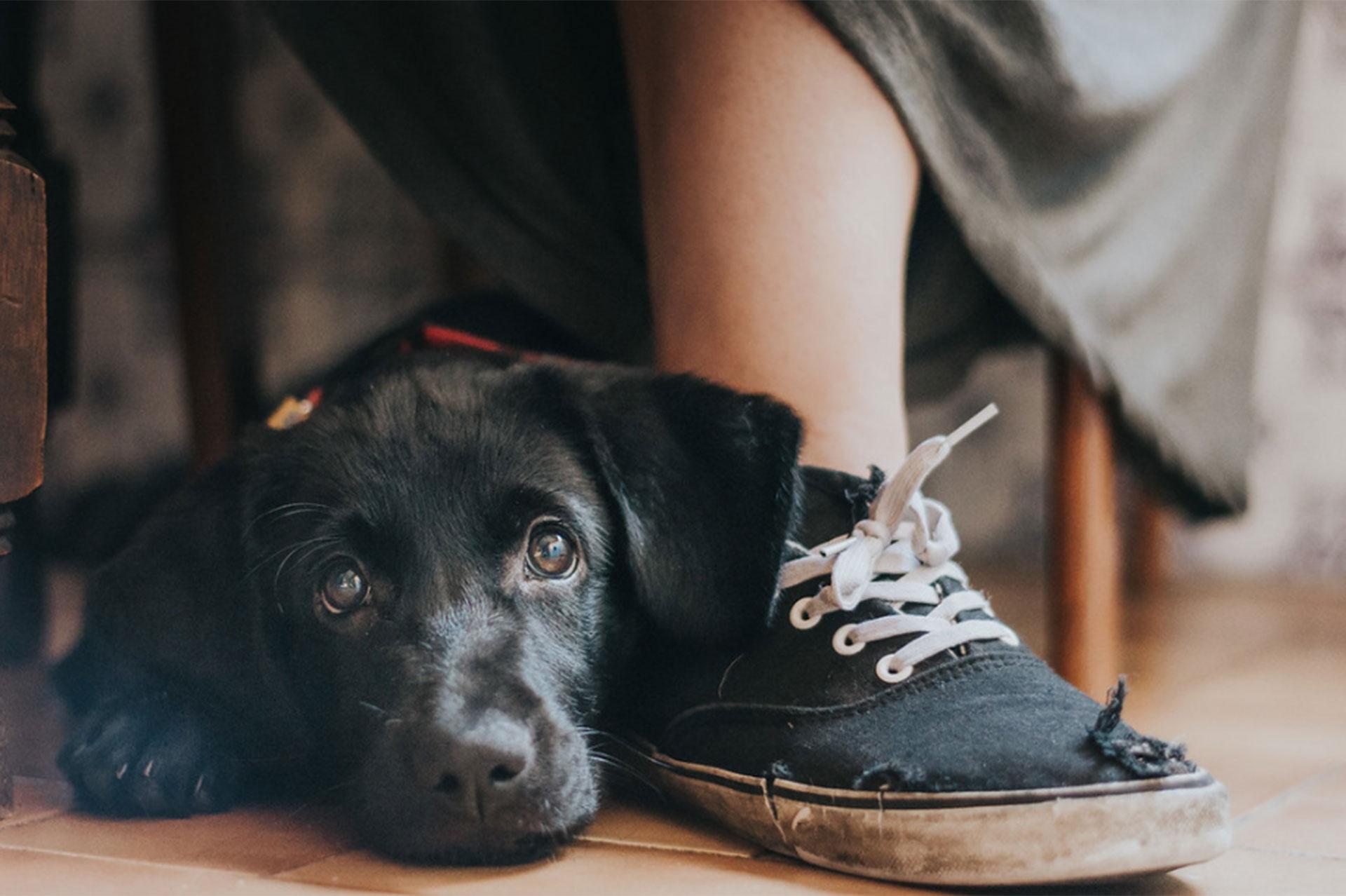 """Categoría: """"Mejor Amigo del Hombre"""". Yzma, un cruce de Golden Retriever, posa junto a una zapatilla desgastada de un niño en Portugal. """"Para mí, capturar momentos cándidos y reales es de lo que se trata la fotografía. Éste es uno de ellos"""", indicó la autora, Maria Davison"""