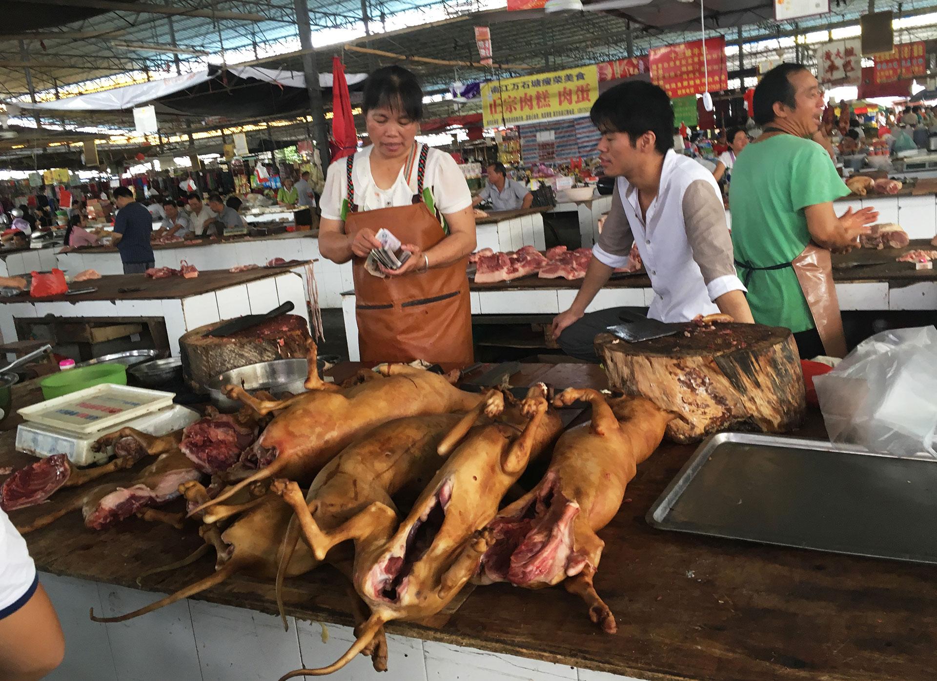El brutal festival es acusado por el maltrato a los animales, muchos de los cuales son golpeados e incluso cocinados vivos. Una creencia popular afirma que cuanto más aterrorizado está el perro al morir, más sabrosa es su carne