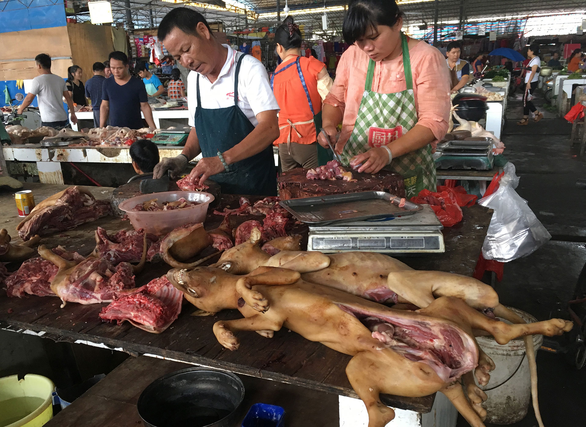 El festival de Yulin no es una tradición arraigada en la sociedad china, sino que fue creado en 2010 por los propios vendedores de carne de perro para incrementar sus ventas