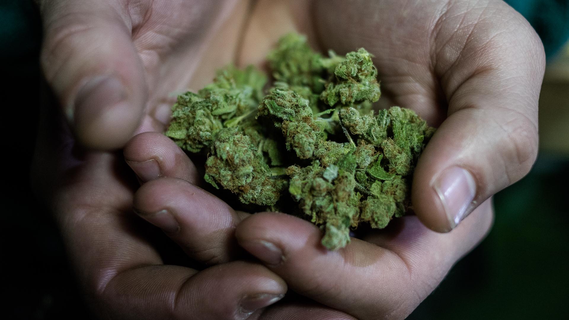 Flores de cannabis (Adrián Escandar)
